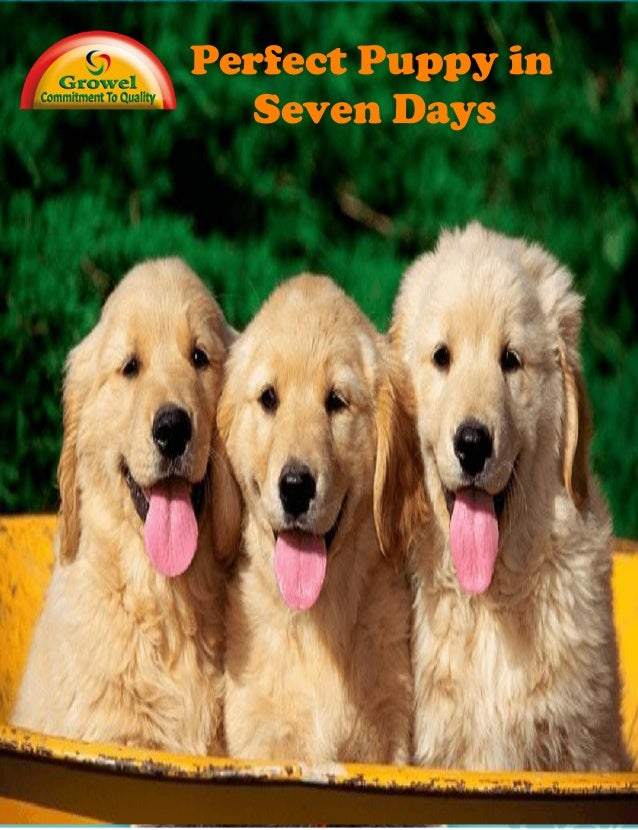 Chapter X: Title Perfect Puppy in7Days: How to Start Your Puppy Off Right Perfect Puppy in Seven Days