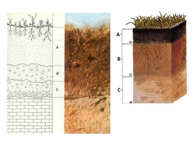 Perfil del suelo 2014 for Perfil del suelo wikipedia