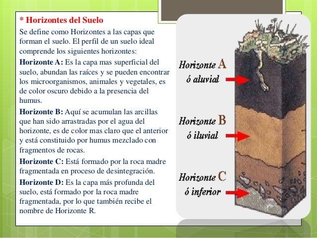 Perfil de suelo xxx for El suelo y sus capas
