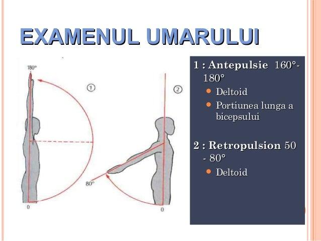 EXAMENUL UMARULUI 1 : Antepulsie 160°180°  Deltoid  Portiunea lunga a  bicepsului  2 : Retropulsion 50 - 80°  Deltoid  ...