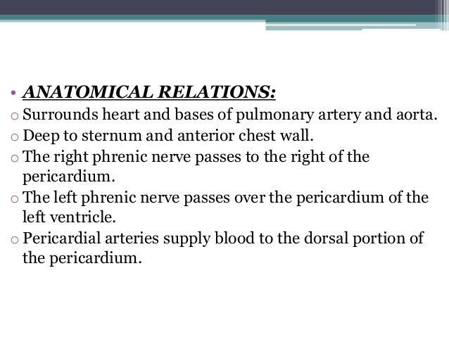 Anatomy of Pericardium