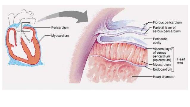 Tuberculosis Pictures Patients Pericardium