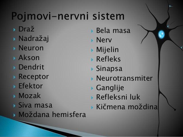 Periferni nervni sistem Slide 2