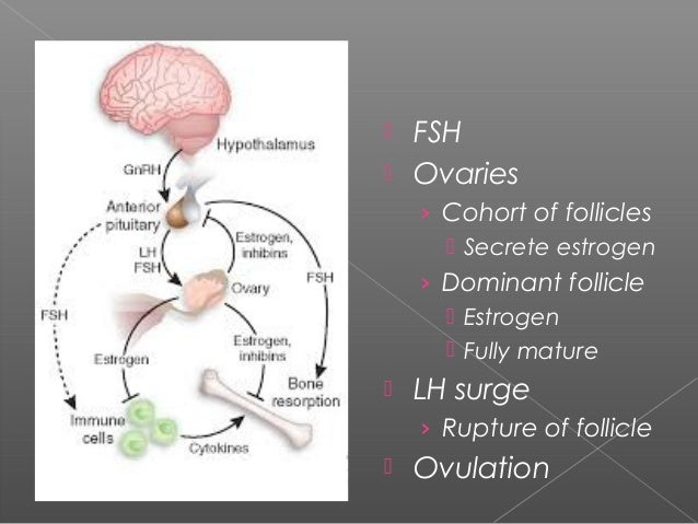 transvestite-estrogen-brain-changes