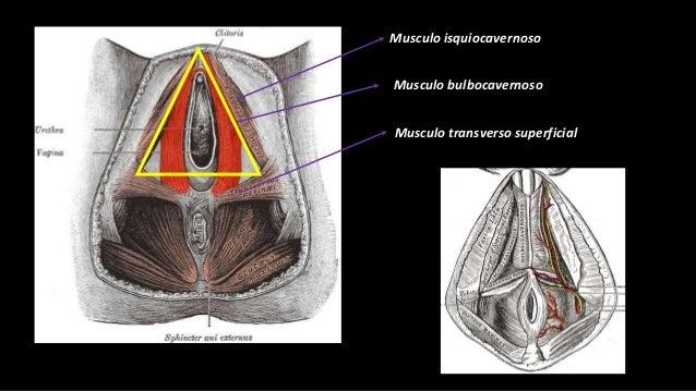 Cómo aprender a aliviar dolor lumbar A solo 15 minutos al día