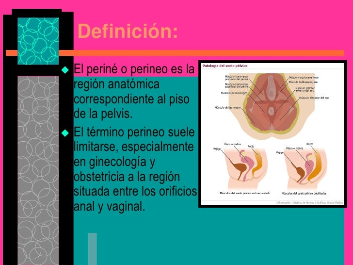Increíble Definición Anatomía Perineal Motivo - Anatomía de Las ...