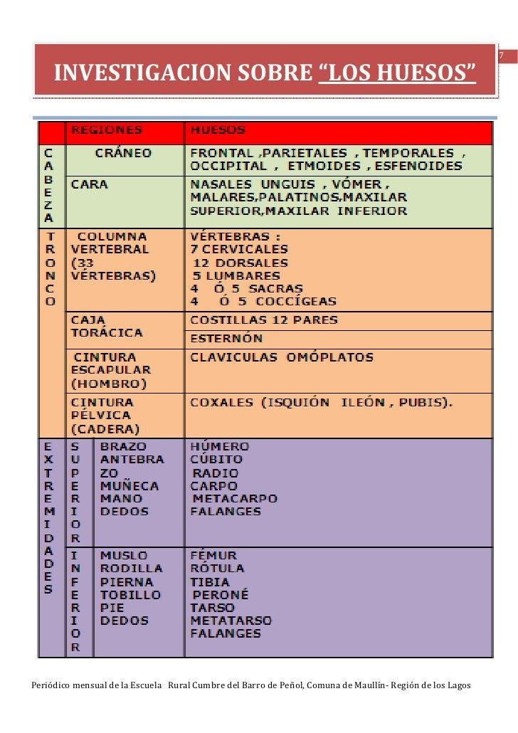 """17     INVESTIGACION SOBRE """"LOS HUESOS""""Periódico mensual de la Escuela Rural Cumbre del Barro de Peñol, Comuna de Maullín-..."""