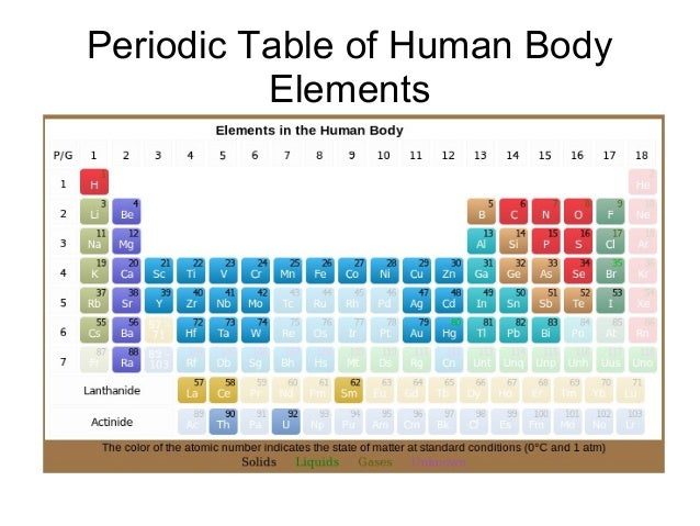 Periodic table of human body elements 1 638gcb1390786598 urtaz Image collections