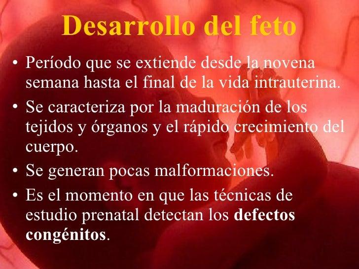 Periodo Fetal Slide 2