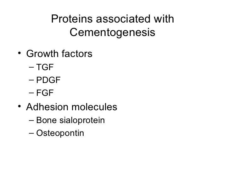 Proteins associated with Cementogenesis <ul><li>Growth factors </li></ul><ul><ul><li>TGF </li></ul></ul><ul><ul><li>PDGF <...