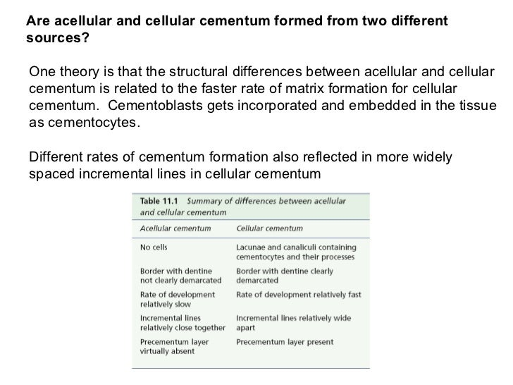 Are acellular and cellular cementum formed from two different sources? One theory is that the structural differences betwe...