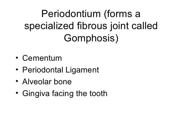 Periodontium (forms a specialized fibrous joint called Gomphosis) <ul><li>Cementum </li></ul><ul><li>Periodontal Ligament ...