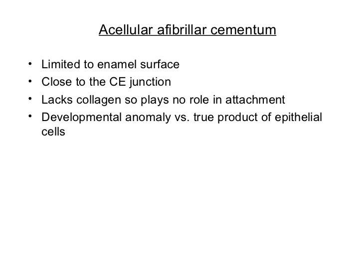 Acellular afibrillar cementum <ul><li>Limited to enamel surface </li></ul><ul><li>Close to the CE junction </li></ul><ul><...