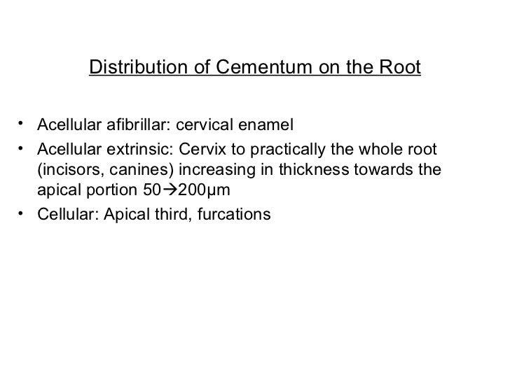 Distribution of Cementum on the Root <ul><li>Acellular afibrillar: cervical enamel </li></ul><ul><li>Acellular extrinsic: ...