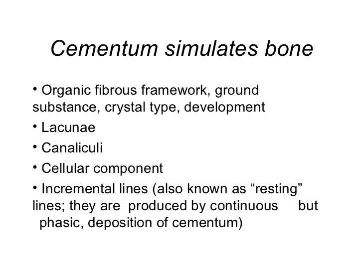 Cementum simulates bone <ul><li>Organic fibrous framework, ground   substance, crystal type, development </li></ul><ul><li...
