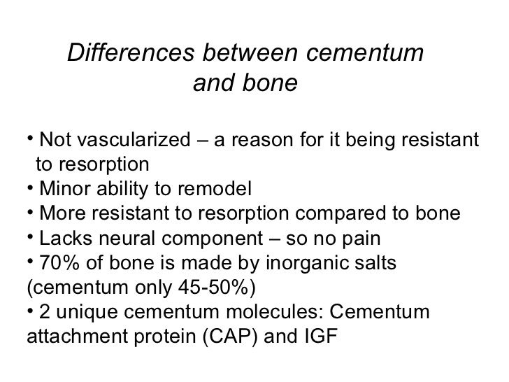 Differences between cementum and bone <ul><li>Not vascularized – a reason for it being resistant  to resorption </li></ul>...