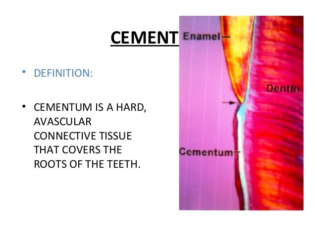CEMENTUM • DEFINITION: • CEMENTUM IS A HARD, AVASCULAR CONNECTIVE TISSUE THAT COVERS THE ROOTS OF THE TEETH.