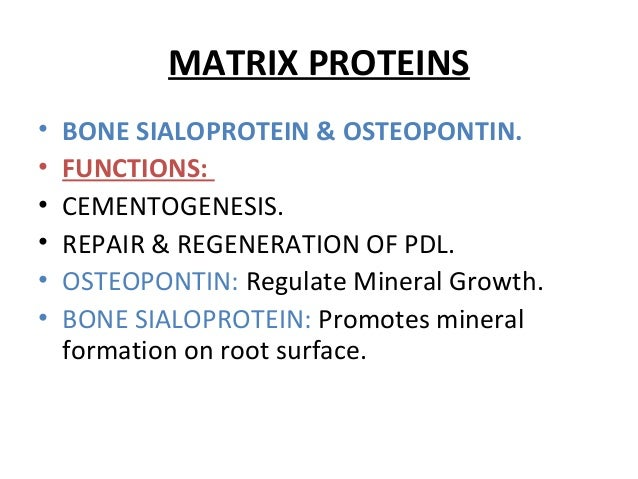 MATRIX PROTEINS • BONE SIALOPROTEIN & OSTEOPONTIN. • FUNCTIONS: • CEMENTOGENESIS. • REPAIR & REGENERATION OF PDL. • OSTEOP...