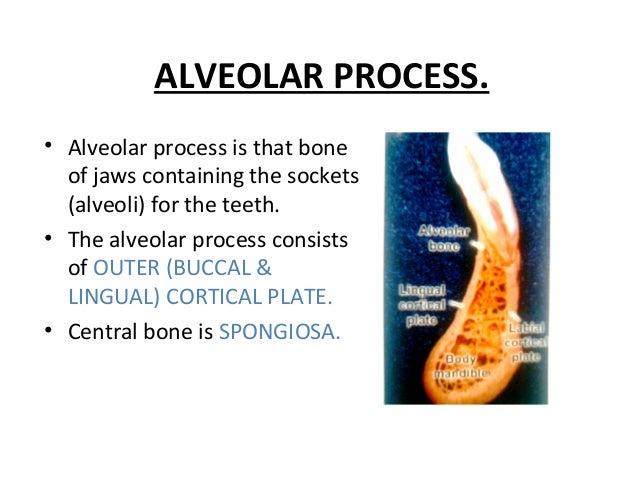ALVEOLAR PROCESS. • Alveolar process is that bone of jaws containing the sockets (alveoli) for the teeth. • The alveolar p...