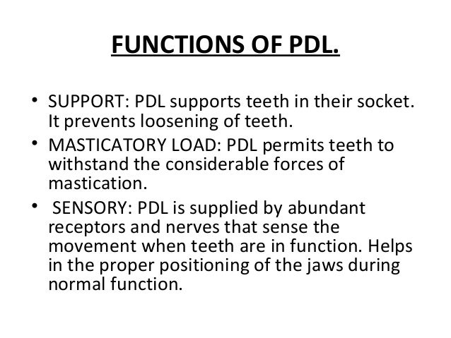FUNCTIONS OF PDL. • SUPPORT: PDL supports teeth in their socket. It prevents loosening of teeth. • MASTICATORY LOAD: PDL p...