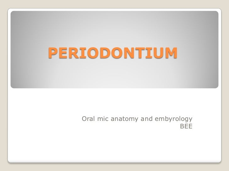 PERIODONTIUM   Oral mic anatomy and embyrology                               BEE
