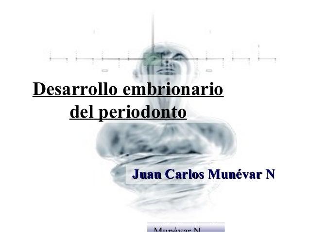 Desarrollo embrionario    del periodonto           Juan Carlos Munévar N              Dr. Juan Carlos