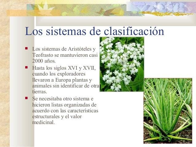 Periodos de clasificacion de las plantas for Clasificacion de las plantas ornamentales