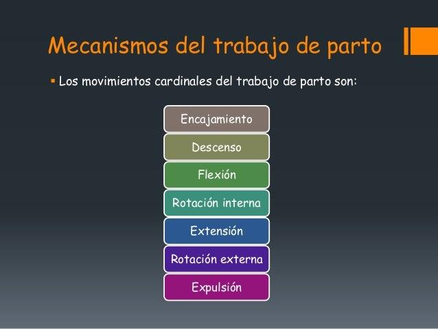 Periodo trabajo de parto 1 for Trabajo de interna en barcelona
