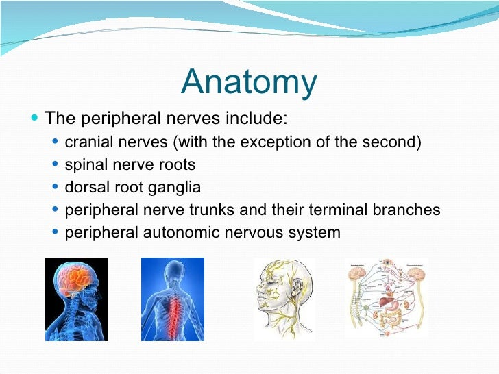 Peripheral Neuropathy An Overview