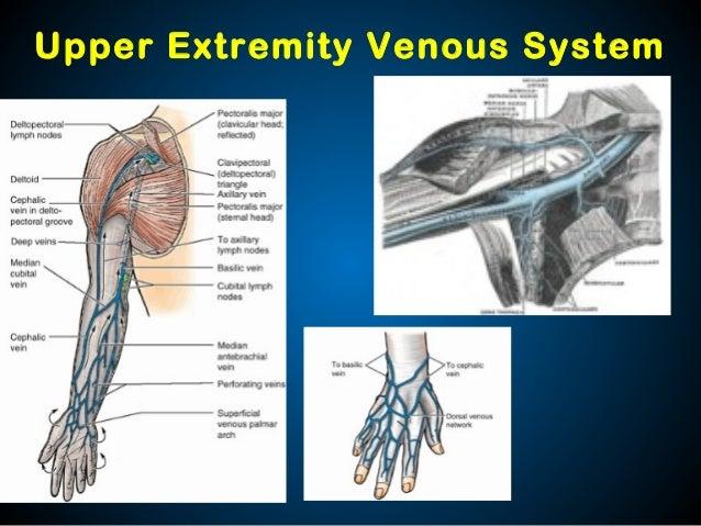 Venous Disease: Peripheral and Embolic