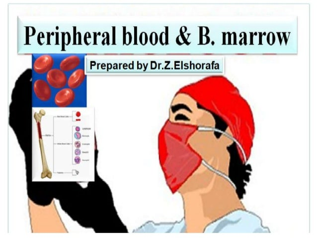 Blood- Blood is sometimes considered to be a fluidconnective tissue because of the mesenchymalorigin of its cells and a lo...