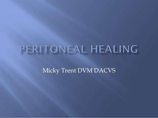 Micky Trent DVM DACVS