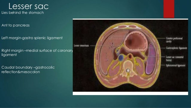 what is the peritoneal cavity