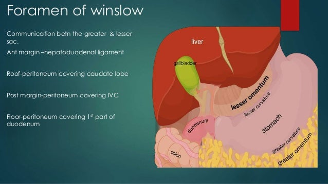 anatomy of peritoneal spaces