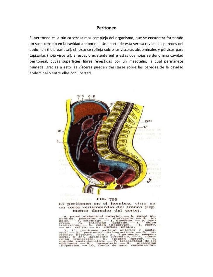 PeritoneoEl peritoneo es la túnica serosa más compleja del organismo, que se encuentra formandoun saco cerrado en la cavid...