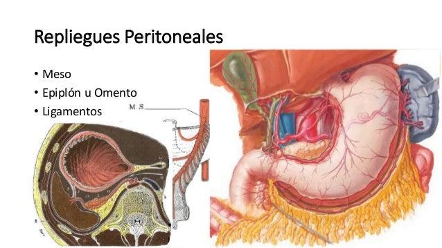 Anatomía - Peritoneo (Mesos, Epiplones, Ligamentos)
