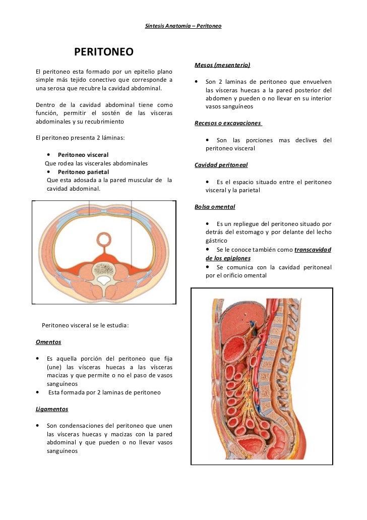 Síntesis Anatomía – Peritoneo                PERITONEO                                                          Mesos (mes...