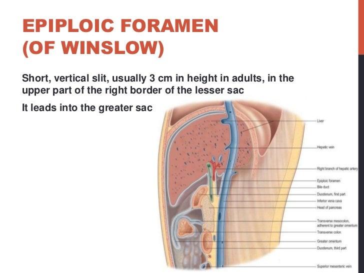 Foramen Of Winslow Diagram House Wiring Diagram Symbols
