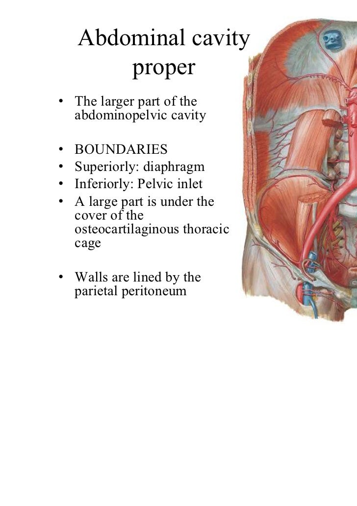 Pelvic Cavity Anatomy Diagrams Pelvic Female Netter's ...