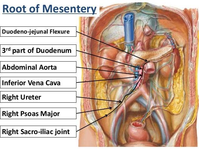 Peritoneum Dr  Mehul Tandel