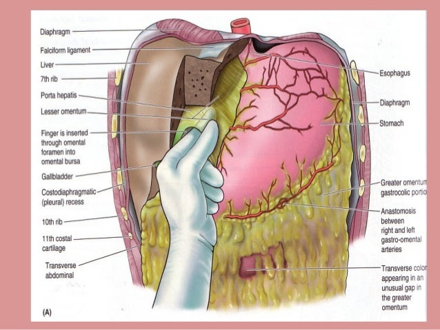 Anatomy of peritoneum