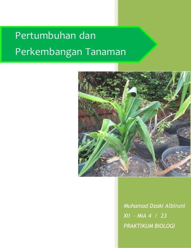 Muhamad Dzaki Albiruni XII - MIA 4 / 23 PRAKTIKUM BIOLOGI Pertumbuhan dan Perkembangan Tanaman