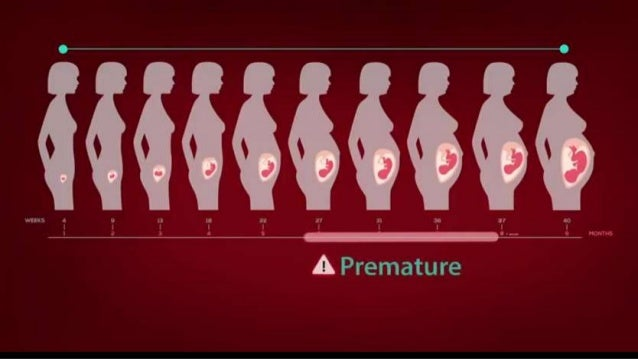 Perkembangan janin
