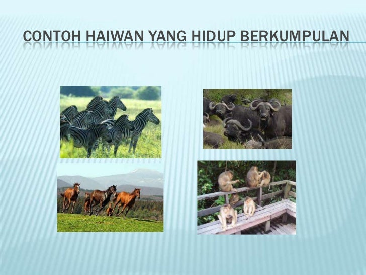 Perlindungan Haiwan Daripada Bahaya