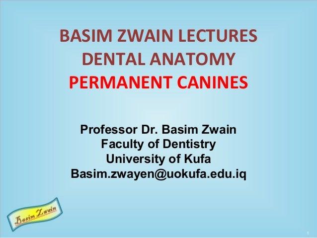 BASIM ZWAIN LECTURES DENTAL ANATOMY PERMANENT CANINES Professor Dr. Basim Zwain Faculty of Dentistry University of Kufa Ba...