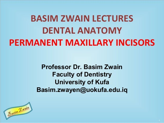 BASIM ZWAIN LECTURES DENTAL ANATOMY PERMANENT MAXILLARY INCISORS Professor Dr. Basim Zwain Faculty of Dentistry University...