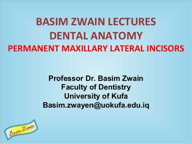 BASIM ZWAIN LECTURES DENTAL ANATOMY PERMANENT MAXILLARY LATERAL INCISORS Professor Dr. Basim Zwain Faculty of Dentistry Un...