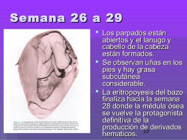 e4fc1748b Período fetal