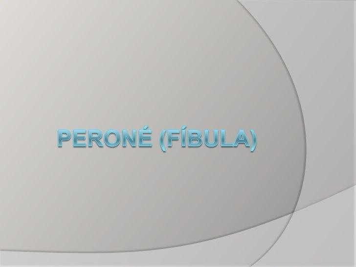 PERONE   Hueso largo forma prisma    triangular   Situado a nivel de la pierna   Dirección lateral de la tibia   Prese...