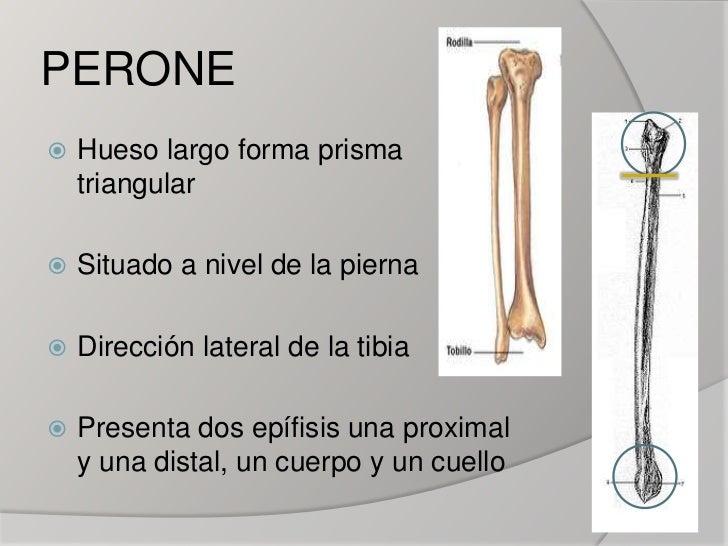 Peroné (fíbula)